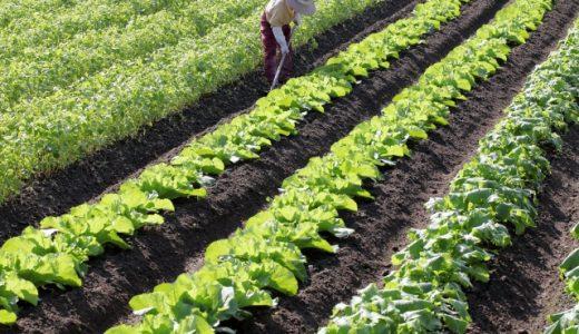 障害者雇用の農業分野における現状と動向