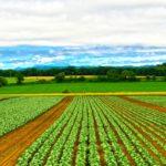 政府が農福連携の推進計画、農業分野の障害者雇用は進むか
