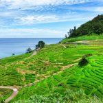 農林水産省が農福連携等応援コンソーシアムを設立